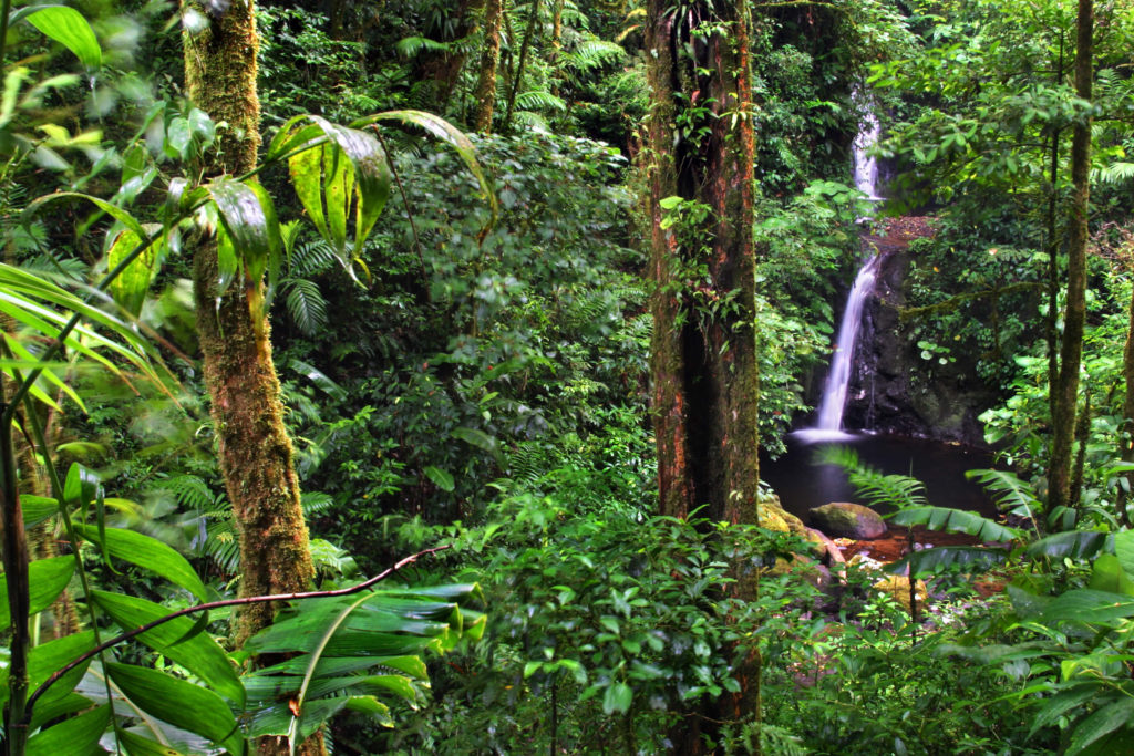 Experience the Cloud Forest