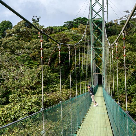 Hanging Bridge & Peaceful Look-outs